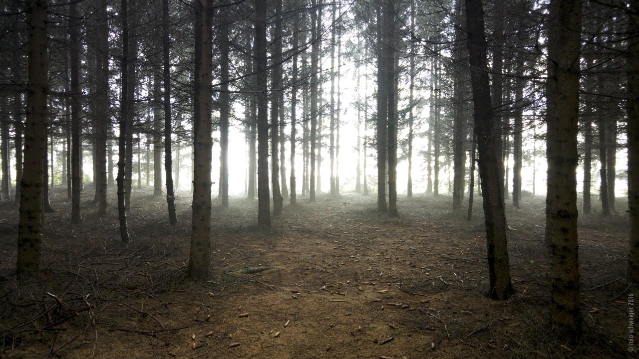 Mio Schweiger Wald