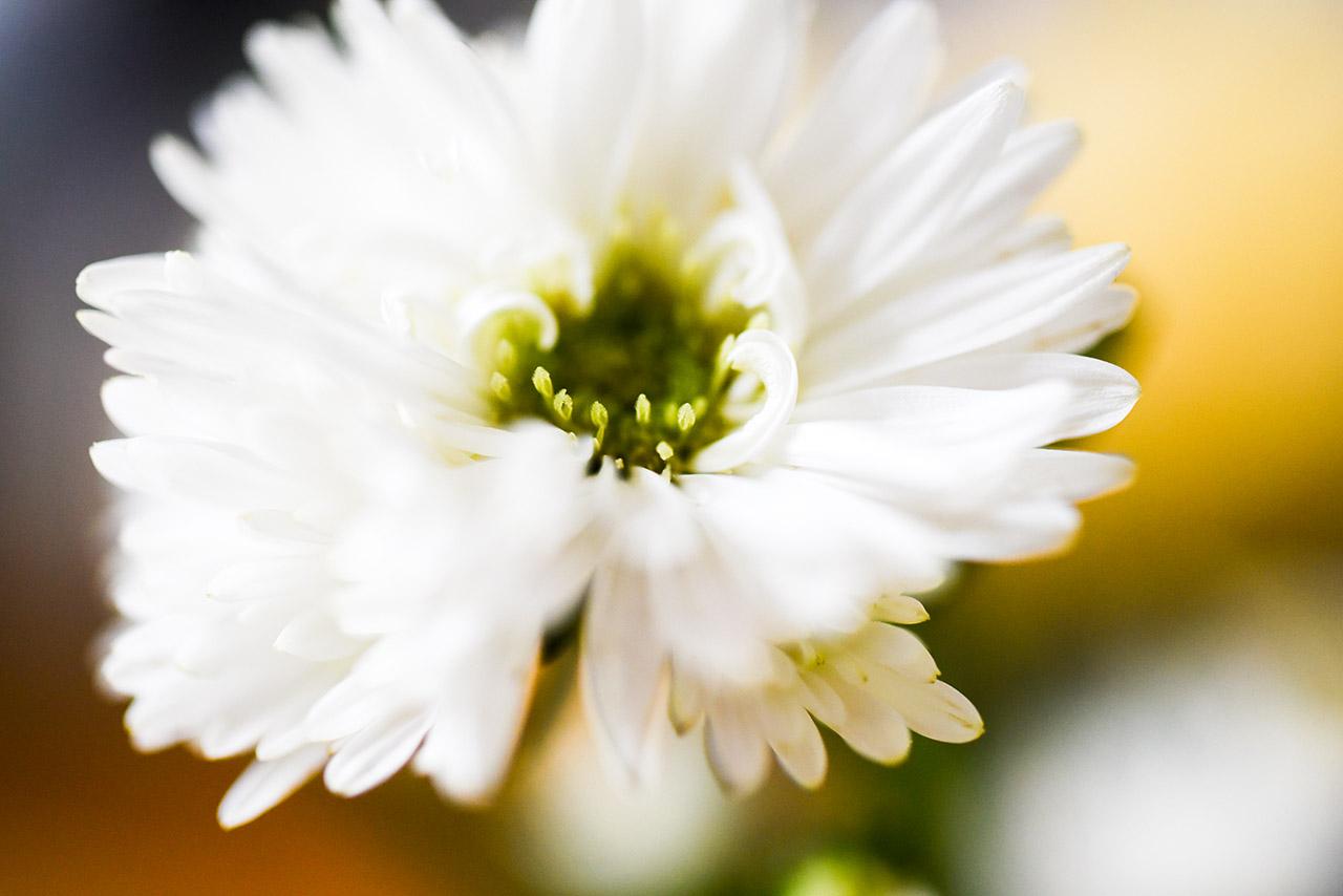 Blüte 01 | © Mio Schweiger Fotografie